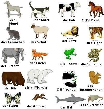eichhörnchen englisch deutsch
